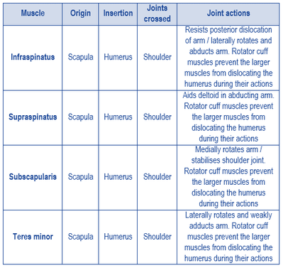 Picture names of rotator cuff muscles
